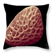 Blackberry Seed, Sem Throw Pillow