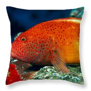 Blackside Hawkfish Throw Pillow