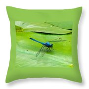 Blue Dragonfly On Lily Pad Throw Pillow