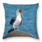Blue-footed Booby On Rock Throw Pillow
