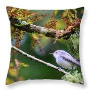 Blue-gray Gnatcatcher In Conifer Throw Pillow