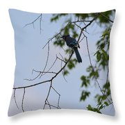 Blue Jay In Tree Throw Pillow