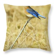 Bluebird In February Throw Pillow