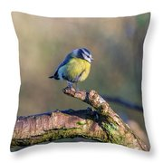 Bluetit On A Branch Throw Pillow