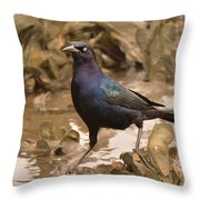 Boat-tailed Crackle Throw Pillow