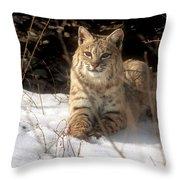 Bobcat In The Snow. Throw Pillow