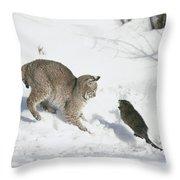 Bobcat Lynx Rufus Hunting Muskrat Throw Pillow