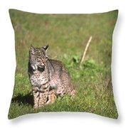 Bobcat - Wildcat Beach Throw Pillow