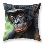 Bonobo Pan Paniscus Portrait Throw Pillow