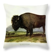 Bos Americanus, American Bison, Or Buffalo Throw Pillow