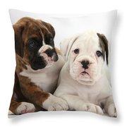 Boxer Puppies Throw Pillow