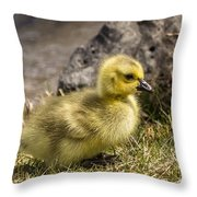 Brand New Throw Pillow