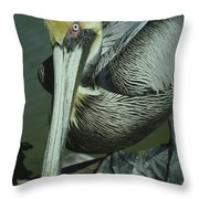 Brown Pelican At The Dock Of The Bay Throw Pillow