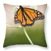 Butterfly In Wait Throw Pillow