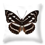 butterfly species Athyma reta moorei Throw Pillow