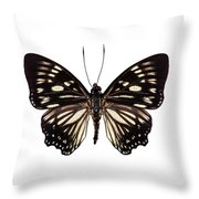 Butterfly Species Euripus Nyctelius Euploeoides  Throw Pillow