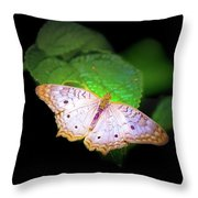 White Peacock Butterfly Wonderland A Series  Throw Pillow