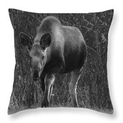 Bw Moose Throw Pillow