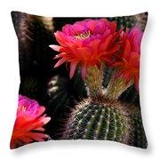 Sonoran Spring Throw Pillow