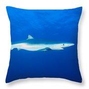 California, Blue Shark Throw Pillow