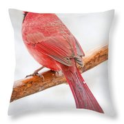 Cardinal Male In Winter Throw Pillow