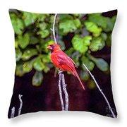 Cardinal Twigging A Break Throw Pillow