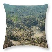 Catfish Fry Throw Pillow