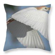 Cattle Egret In Flight Throw Pillow
