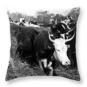 Cattle: Longhorns Throw Pillow