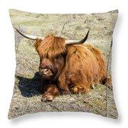Cattle Scottish Highlanders, Zuid Kennemerland, Netherlands Throw Pillow