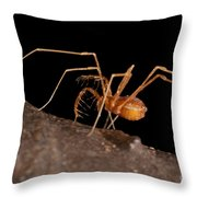 Cave Harvestman Throw Pillow