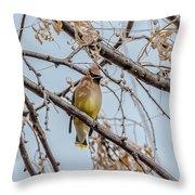 Cedar Waxwing Beauty Throw Pillow