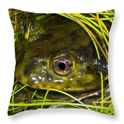 Chilean Widemouth Frog Throw Pillow