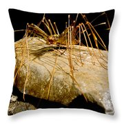 Chinese Cave House Centipede Throw Pillow