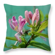 Chinese Honeysuckle  Throw Pillow