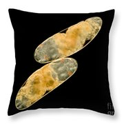 Chironomid Eggs, Lm Throw Pillow