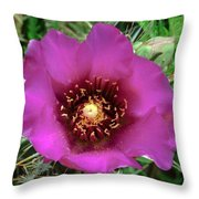 Cholla Cactus Flower Throw Pillow