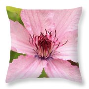 Clematis Hagley Hybrid Throw Pillow