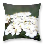 Close-ups Of A White Meadow Flower Throw Pillow