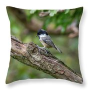 Coal Tit Throw Pillow