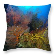Colorful Assorted Sea Fans And Soft Throw Pillow