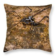 Colorful Harvestman Throw Pillow