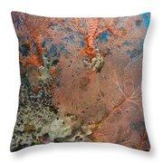Colourful Sea Fan With Crinoid, Papua Throw Pillow