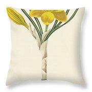 Common Yellow Crocus Throw Pillow