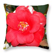 Coral Camellia At Pilgrim Place In Claremont-california  Throw Pillow