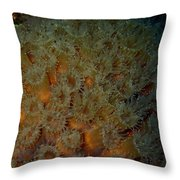 Coral Feeding At Night Throw Pillow