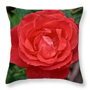 Coral Rose At Pilgrim Place In Claremont-california Throw Pillow