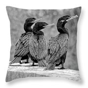 Cormorant Trio Throw Pillow