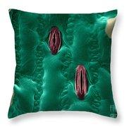 Corn Leaf Stomata, Esem Throw Pillow