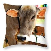 Cow 2 Throw Pillow